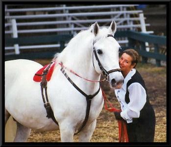 Royal Lipizzan Stallions Dressage Clinics Performances